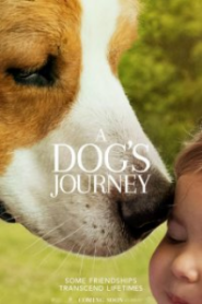 Dostumun Yolculuğu – A Dogs Journey 2019